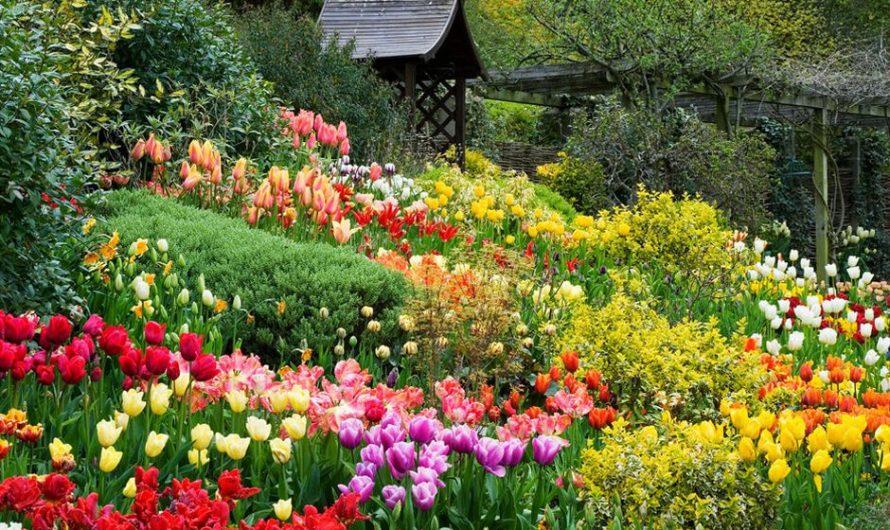 Cóys nghĩa gì khi mơ thấy hoa bị héo? Nên đánh lô con gì?