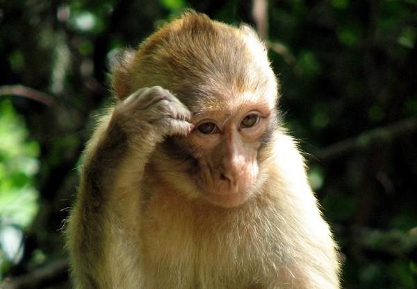 Nằm mơ thấy khỉ là điềm lành hay dữ ? Đánh số mấy trúng ?