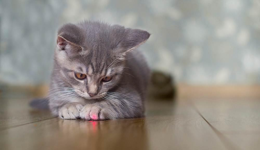 mơ thấy mèo đuổi theo
