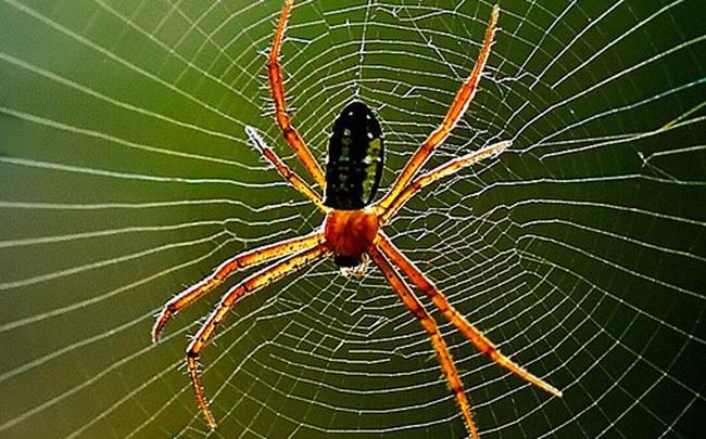 Nằm mơ thấy con nhện có điềm báo gì, đánh con số mấy?